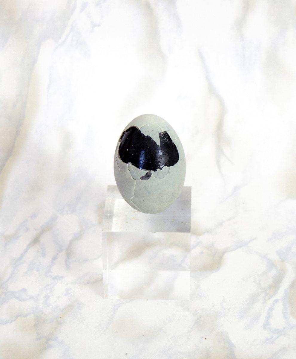 Thousand Year Old Egg | Animal Magazine | Laila Gohar