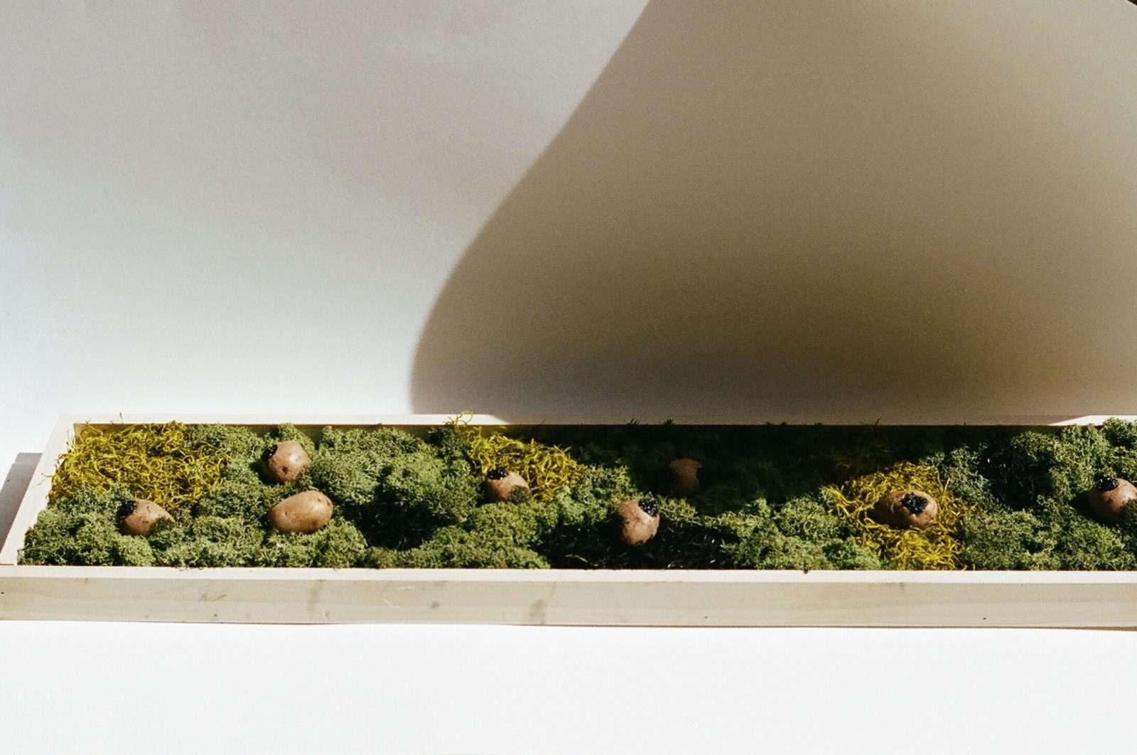 Concrete |Laila Gohar