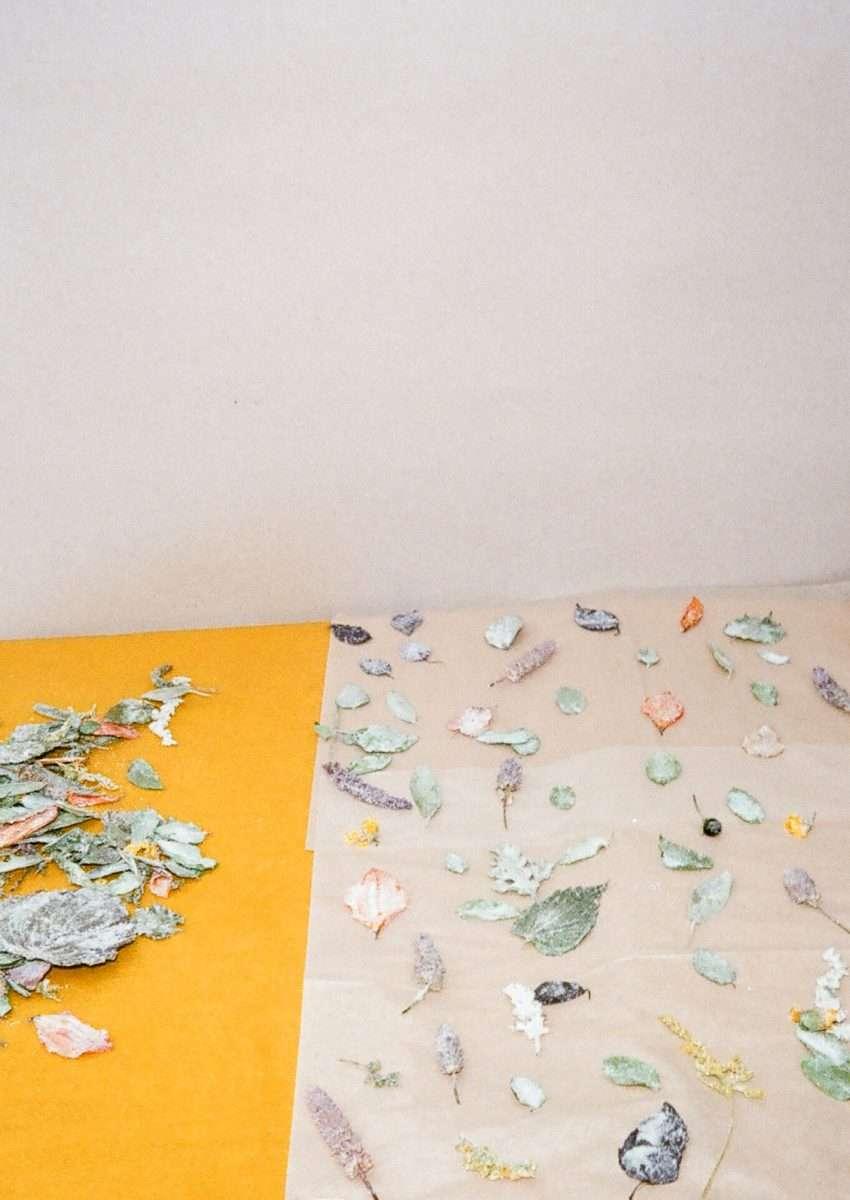 The Glass House |Laila Gohar